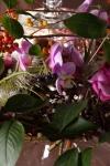 Композиция цветов  - Вишневый сад