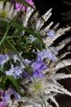 Композиция цветов  - Сиреневый туман