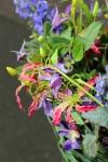 Композиция цветов  - Запах лета