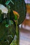 Композиция цветов  - Каскад