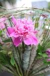 Букет  - Веретено красавицы