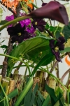 Композиция цветов  - Колыбель природы