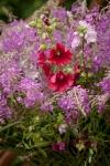 Композиция цветов  - Солнечный луг