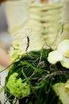Букет невесты  - Зеленый зонтик