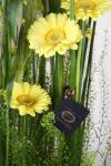 Композиция цветов живая композиция - Частичка природы