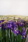 Композиция цветов букет из ирисов - Двенадцать месяцев