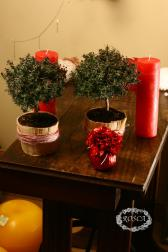 Растение в горшке - Мирт