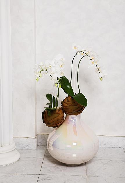 Композиция цветов орхидея в вазе - Орхидея