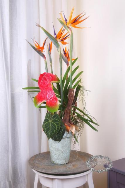 Композиция цветов Бизнес композиция - Райская птица